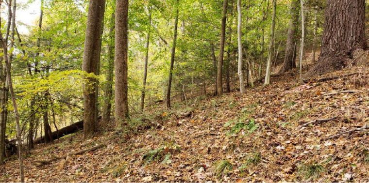 The Beginner Slope of the proposed Unicoi County Bike Park