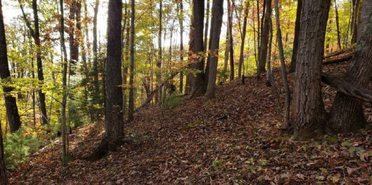 The South Slope of the proposed Unicoi County Bike Park